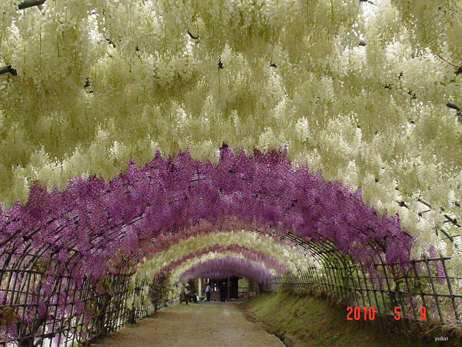 Fantastico tunel wisteria 7 pics ons ke for Jardines kawachi fuji