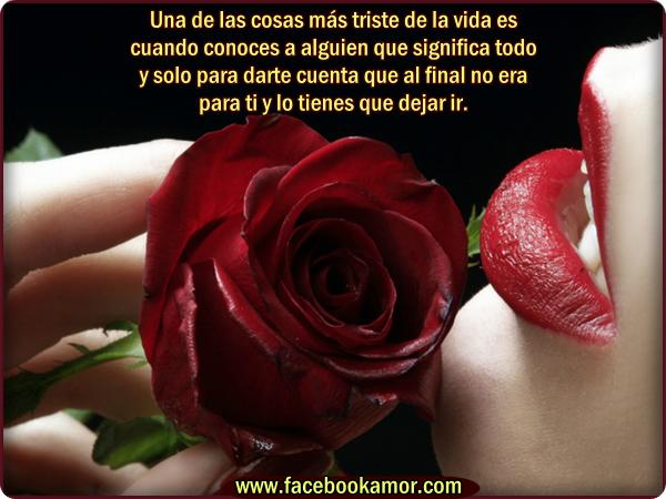 Imagenes Bonitas De Flores Y Rosas - Imágenes flores de rosas bonitas con frases para compartir