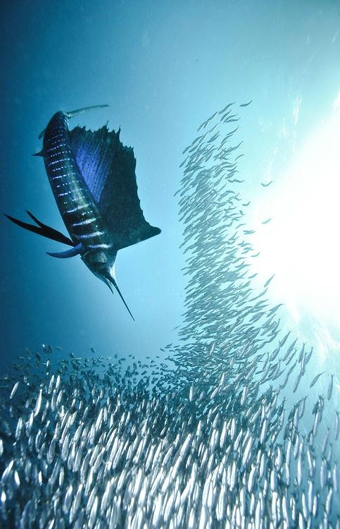 I love coastal living ryby wiata aglica najszybsza for 99 5 the fish