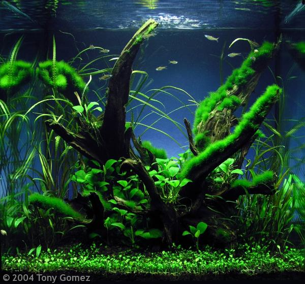 AquaticsZone: Common Aquarium Plants for Beginners