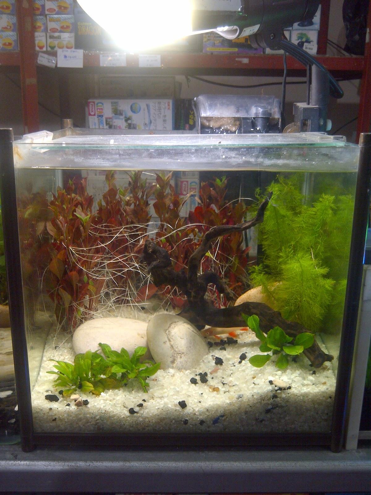 Rejeki Aquarium Nikita Size L Ukuran 40 X 25 28cm Dekorasi Sederhana Dan Harga Terjangkau