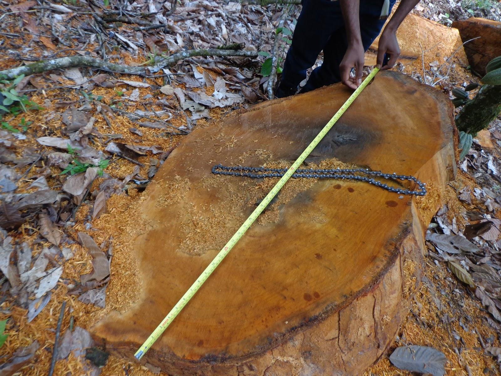 farta quantidade de madeira animais silvestres e armas de caça #906638 1600x1200