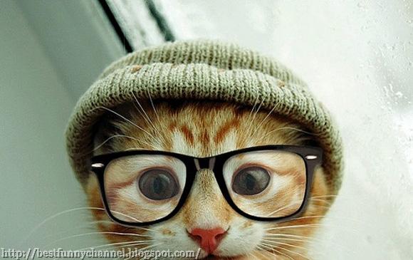 Modern cat.