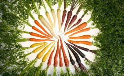 καλλιέργεια καρότων