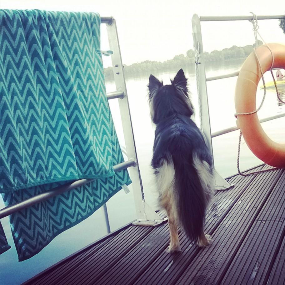 #ilovemydog