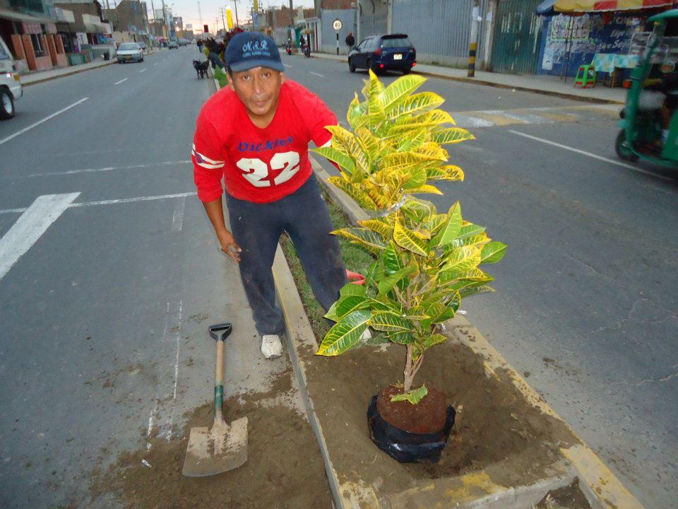 Grupo deprimera com y en 8 meses cambiaron los crotos por for Plantas ornamentales croto