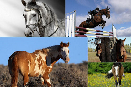 Fotografías de caballos V (Equinos de Pura Sangre)