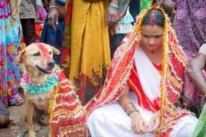 seorang gadis harus menikahi anjing untuk membuang sial
