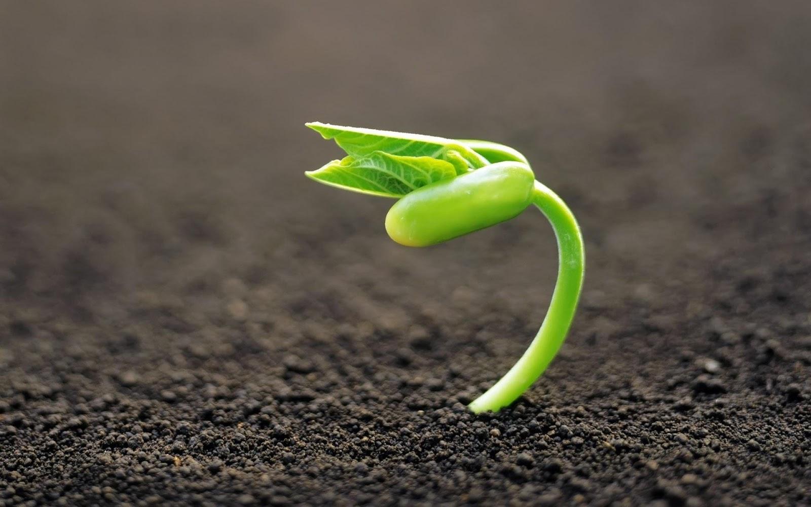 New plant macro