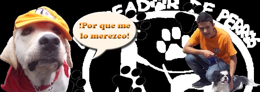 El Pasedor De Perros M.R
