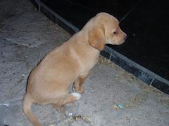 Grieks hondje....