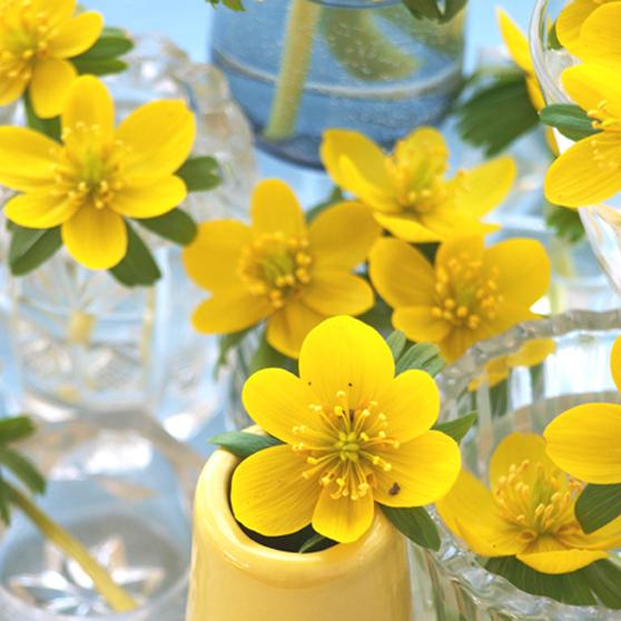 gule erantisser i vaser.