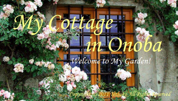 <center>My Cottage in Onoba</center>