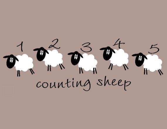 sheep numbers