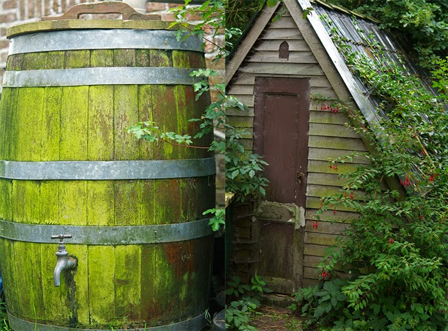 Rainwater tank and chicken coop