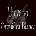 FANBLOG ORQUIDEA BLANCA