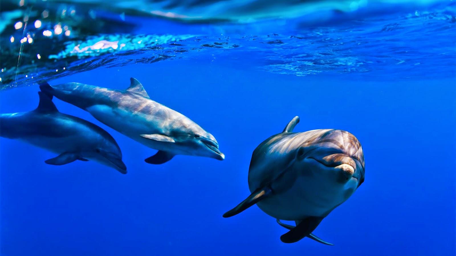 Aumentan las embarcaciones ilegales que se dedica al avistamiento de cetáceos
