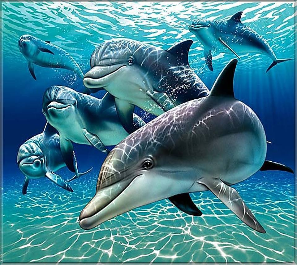 Fondo del mar con delfines imagui - Fotos fondo del mar ...