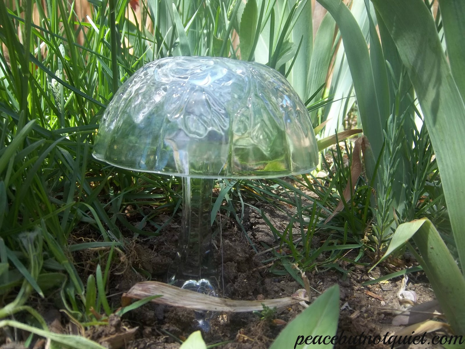 lg mushroom
