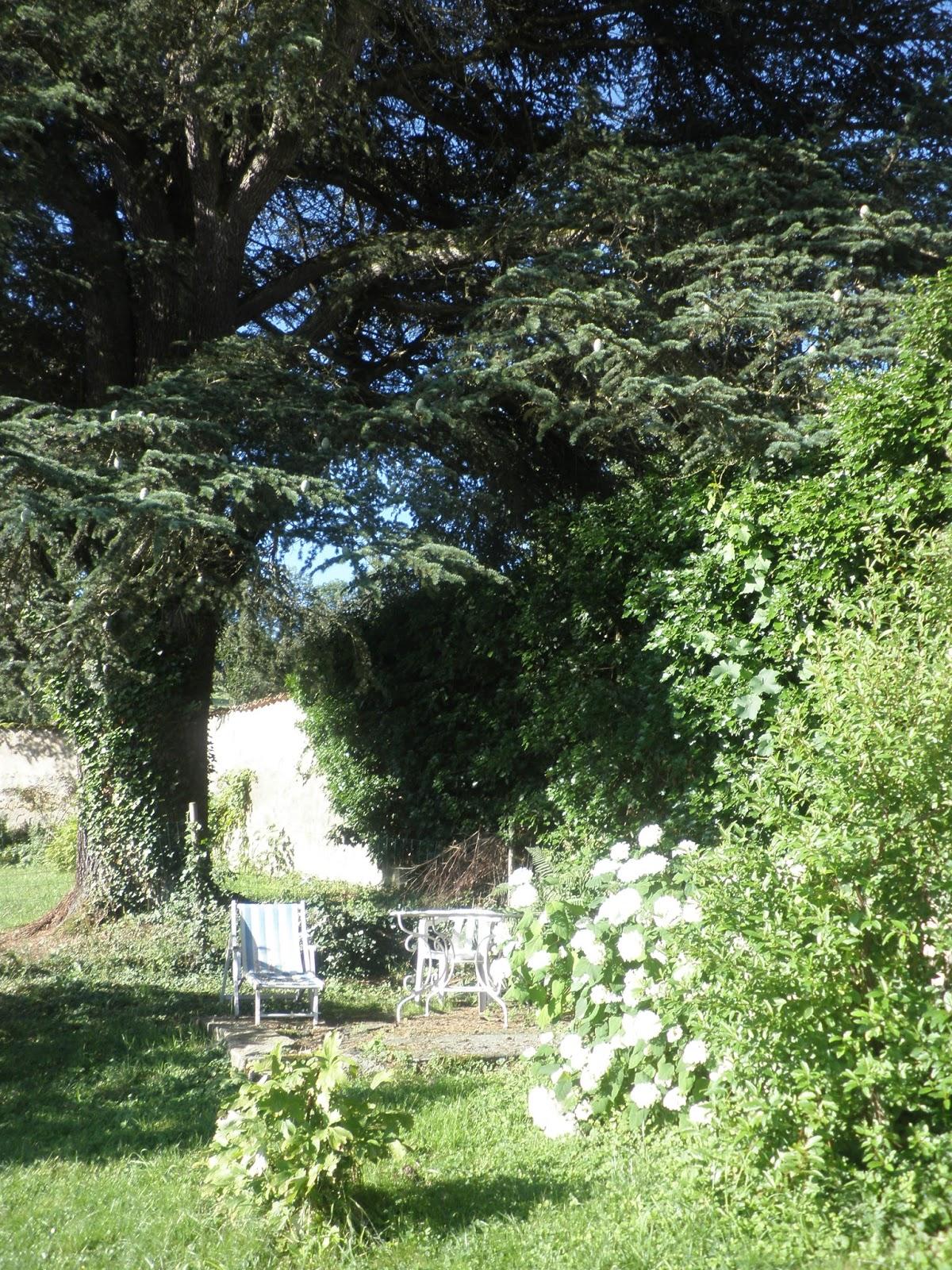 Le jardin des Simples: Ombre et lumière.