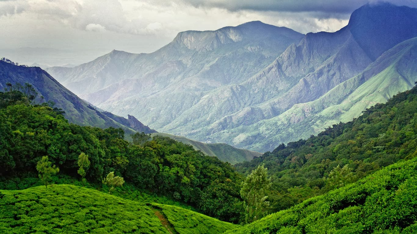 Tea fields in Munnar, Kerala, India (© Vidhu S/500px) 312