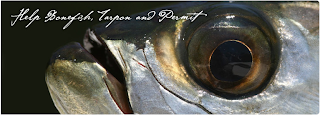 Flyfishbonehead is fly fishing in saltwater - fly tying videos & Tail fly fishing magazine