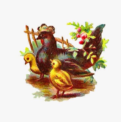 http://1.bp.blogspot.com/-a9KDnuUqRZs/Uzn6EPAW37I/AAAAAAAATbI/cTIzEnIKeJA/s1600/hen_chicks.jpg