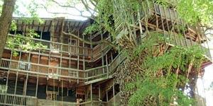 Rumah Pohon Terbesar di Dunia