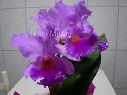 A bela orquídea