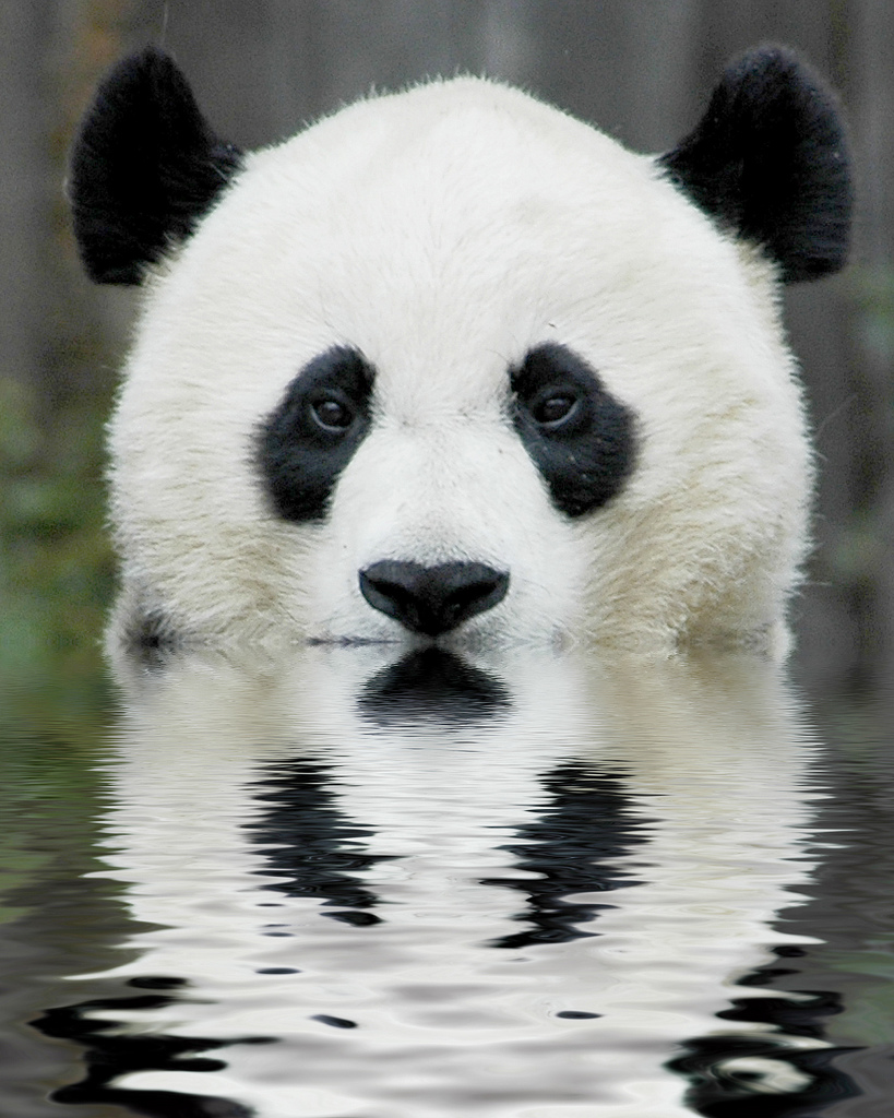 planet earth animals - photo #24