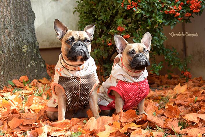 Selbstgenähter Hundemantel für französische Bulldogge