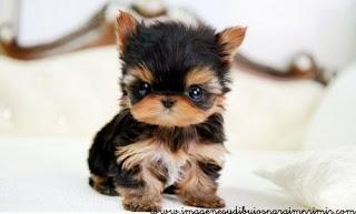 pequeño perrito en imagen