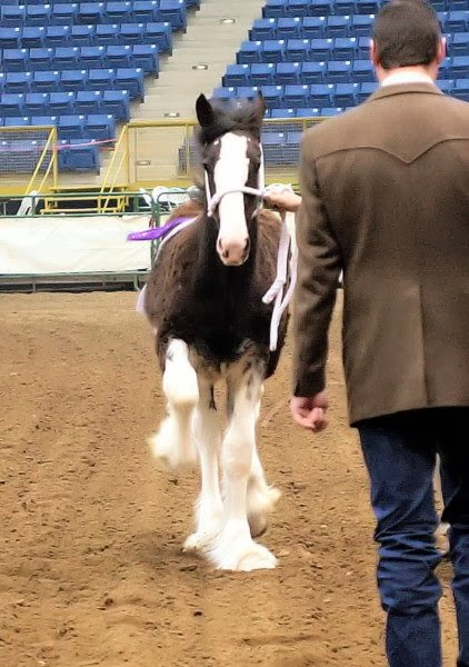Brian Coleman - Draft Horse Judge - Article