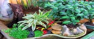 Plantas y flores plantas ornamentales for Importancia de las plantas ornamentales