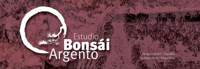 Bonsai argento