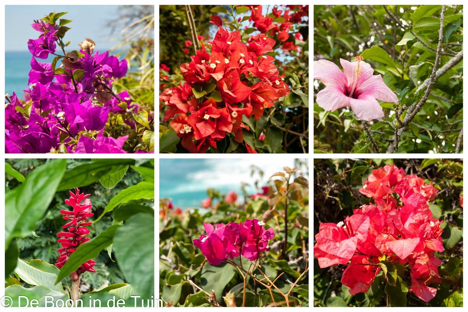 flora hawaii azalea