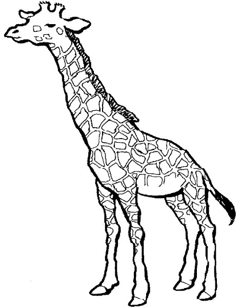 printable giraffe coloring pages for kids coloringsnet