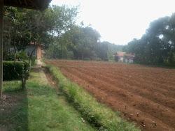 Pekarangan di Desa Cikarawang, Darmaga, Bogor