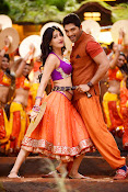 Race Gurram Movie Photos Gallery-thumbnail-14