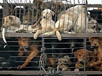 Cães são assados vivos na China para consumo humano