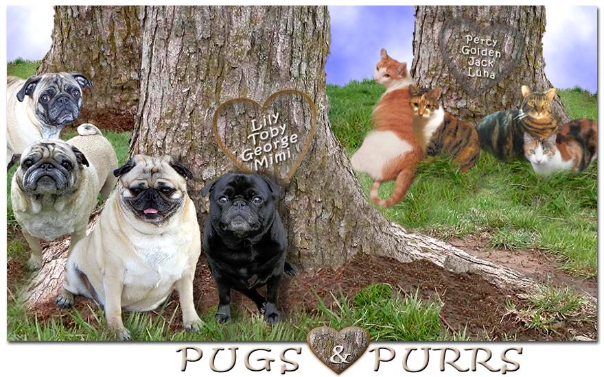 Pugs & Purrs