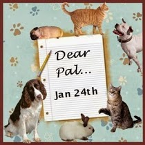 LETTER TO MY PET