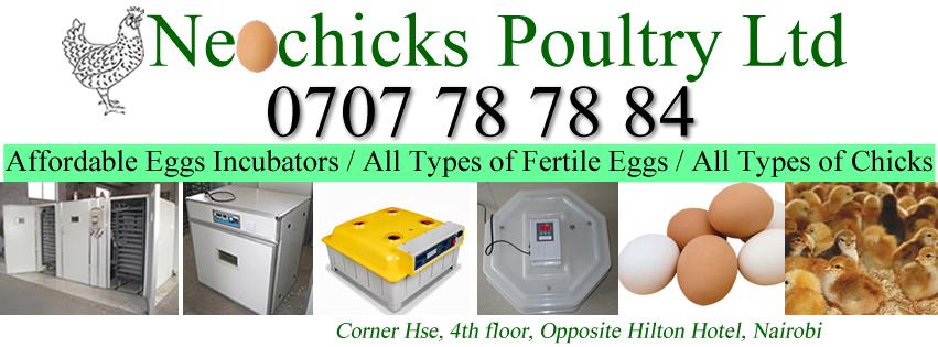 Poultry eggs incubators