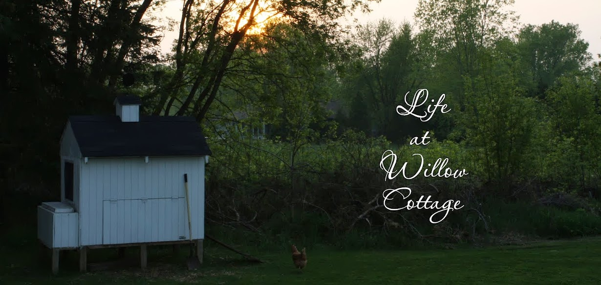 Life At Willow Cottage