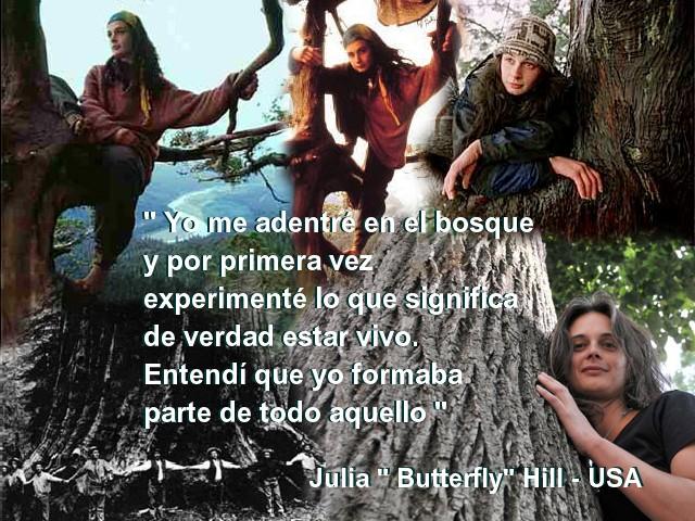 http://1.bp.blogspot.com/-aDDitqCafME/Tn-6WJ1jbJI/AAAAAAAABh8/4x-1LpRc11w/s640/Julia+Butterfly+Hill.jpg