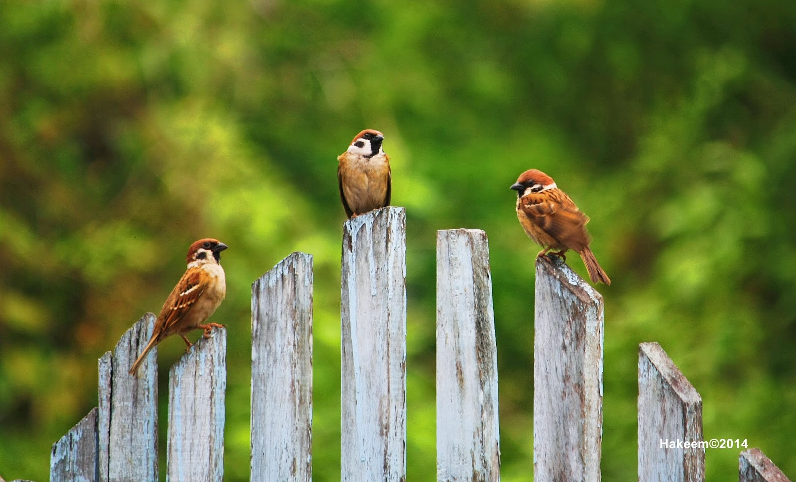 Image Result For Cerita Burung Kesayangan