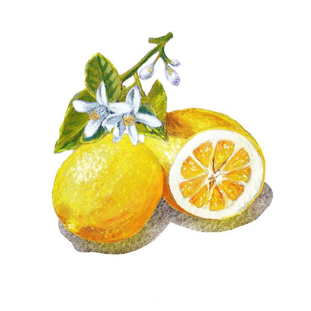 Lemon Marmalade Label