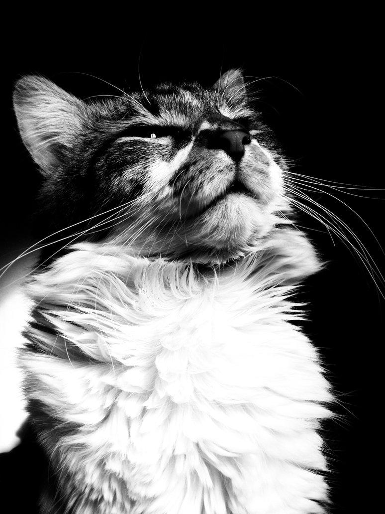 Tử vi Tuổi Mão trọn đời & Vận mệnh người Tuổi Mèo