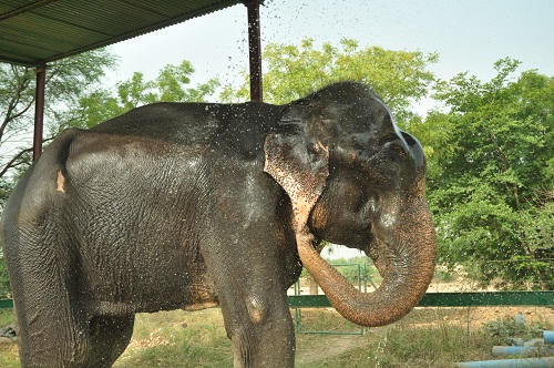 Time for a Cause:A heart warming story of Elephant named Raju