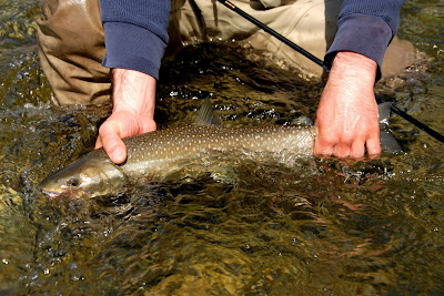 Cutthroat Trout from a fly fishing trip on the Phillips River, British Columbia